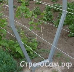 Шпалеры под виноград своими руками