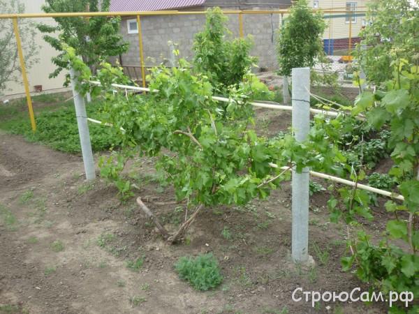 Примитивная опора под виноград. Использованы асбестоцементные трубы диаметром 100мм и стальные трубы диаметром 25 мм