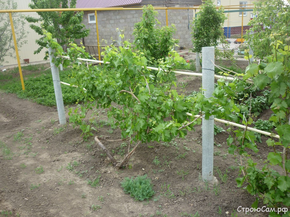 Как сделать стойки под виноград